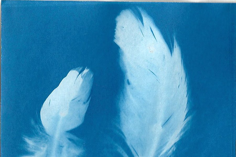 Cyanotypes - One Day Workshop: Online image