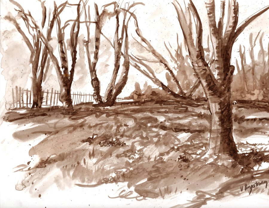 Drawing with Walnut Ink: Online Class image